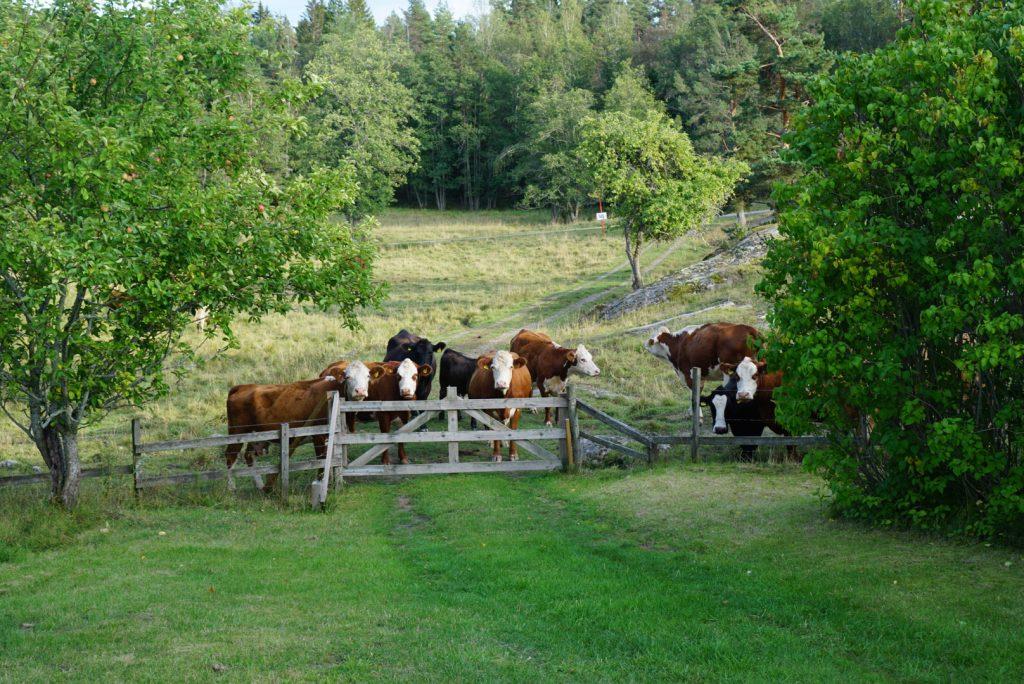 Kor i hage runt Nynäs slott